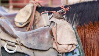 Horses & equestrian