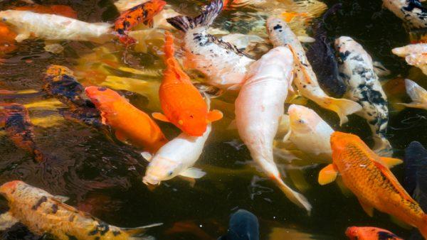 Fish & aquatic animals